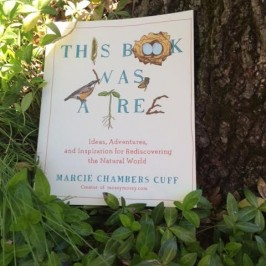 End of Summer Fun:  Check out THIS BOOK WAS A TREE for family nature activities